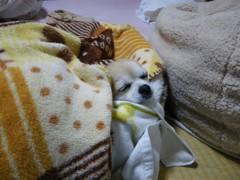 2010_0105_1.jpg