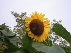 2010_0719_4.jpg