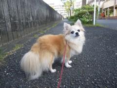 2011_0911_1.jpg